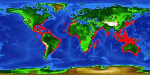 World distribution map for the tripletail