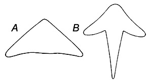 The cubera snapper can be distinguished from the gray snapper by the shape of the vomerine tooth patch: A. cubera snapper, B. gray snapper. Image courtesy U.S. Fish and Wildlife Service Circular 252