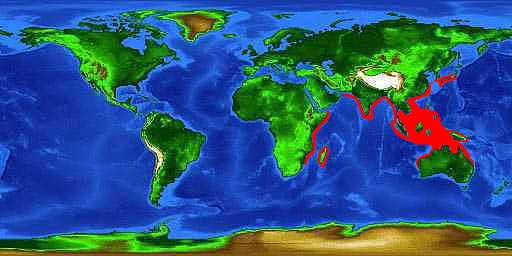 World distribution map for the tawny nurse shark