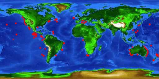 World distribution map for the pelagic stingray