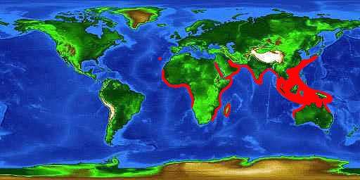 World distribution map for the milk sharpnose shark