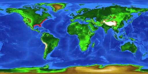World distribution map for the red drum.