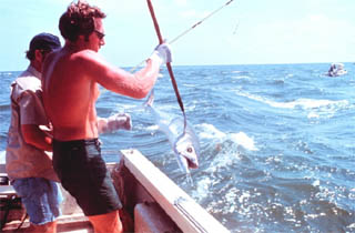 Sport fishing for king mackerel. Photo courtesy NOAA