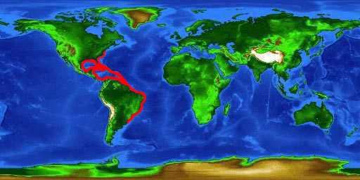 World distribution map for the barbfish