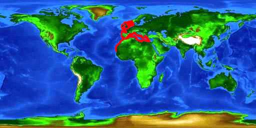 World distribution map for the small-spotted catshark