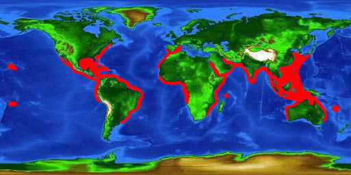 World distribution map for the scalloped hammerhead