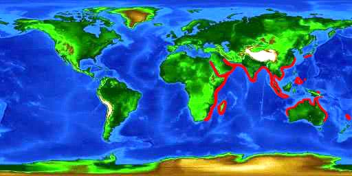 World distribution map for the zebra shark