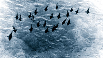 Aerial photograph of bluefin tuna spawning formation. Image courtesy NOAA