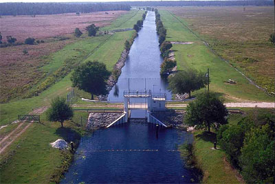 Canals of south Florida provide suitable habitat for many non-indigenous species including the spotted tilapia. Photo courtesy South Florida Water Management District