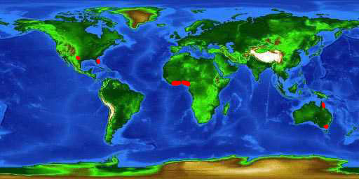 World distribution map for the spotted tilapia