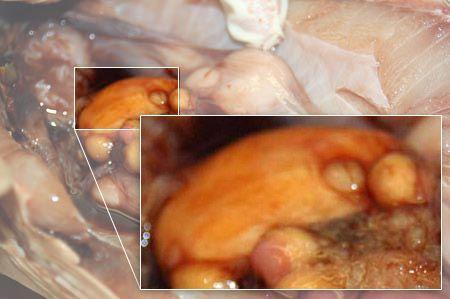 Close up: ovary.