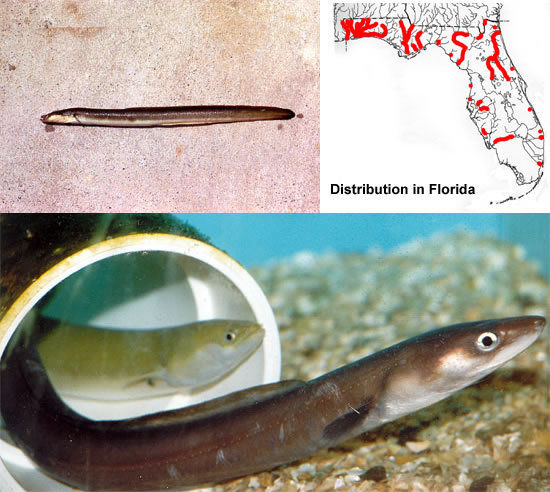 Freshwater Fish ID Guide – Discover Fishes