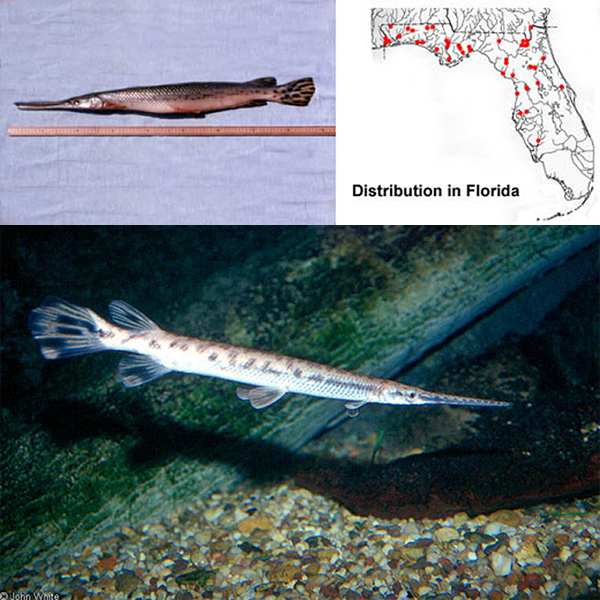 Freshwater Fish ID Guide – Discover Fishes besides Oceanography Lab at DSC  Victoria Czupta  UR  There's plenty of fish additionally Freshwater Fish ID Guide – Discover Fishes also Fish Facts and Worksheets   KidsKonnect likewise About Me Worksheet  English US  by Silly Fish Learning   TpT furthermore All About Whale Sharks Worksheet – Free Publishing furthermore The four traits of fish further Ecology Worksheet Answers Ecological Pyramids Worksheet Answers Fish together with Fantastic Fish   Zoological Society of Milwaukee together with Worksheet Answer Key further Activities – Kiwi Conservation Club moreover Whale Shark   National Geographic furthermore life in the colonies worksheet answers   GREAT SOCIAL STUS further Solved  Introduction To Evolution Worksheet 1 Name   ID Pr further Great White Shark   National Geographic together with Oceans and Seas at EnchantedLearning. on name that fish worksheet answers