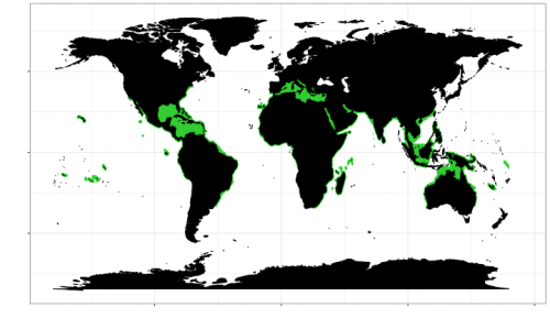World distribution of the blacktip shark. Map © Chondrichthyan Tree of Life