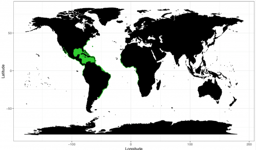 World distribution for the lemon shark. Map © Chondrichthyan Tree of Life
