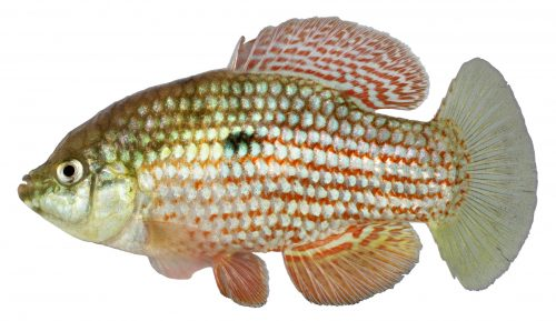 Lateral view of a fish