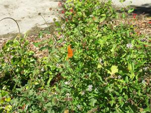orange butterfly on plants