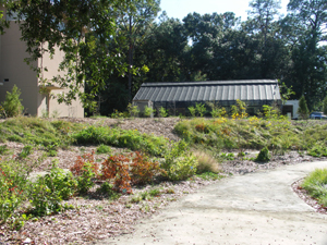 mulched plant beds