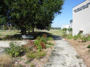 plants along a pathway
