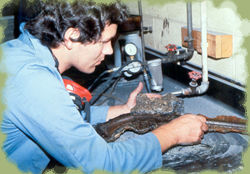 James Levy - Conservator