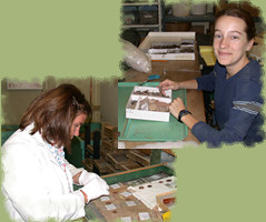 Museum technicians (Korinn and Shanna)