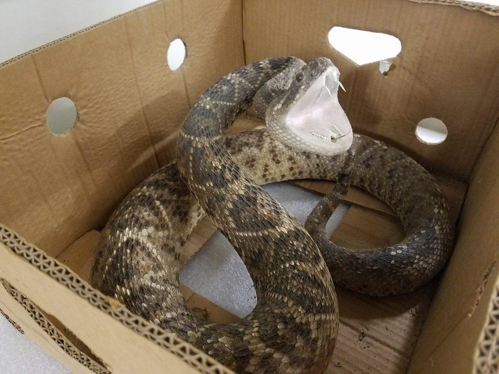 snake specimen