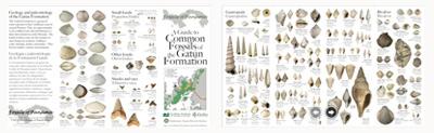 Gatun fossils guides