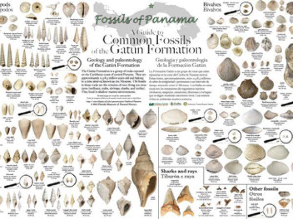 gatun fossils poster