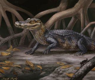 Artistic rendering of Culebrasuchus mesoamericanus, the most primitive known caiman, described by Hastings et al., 2013. © Art by Danielle Byerley.