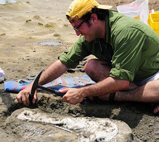 Jorge Velez-Juarbe in Panama excavating a dolphin skull. © Photo by Nick Pyenson.