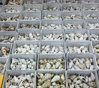 Part of the specimens of the Invertebrate Paleontology collection. © Photo by Austin Hendy.