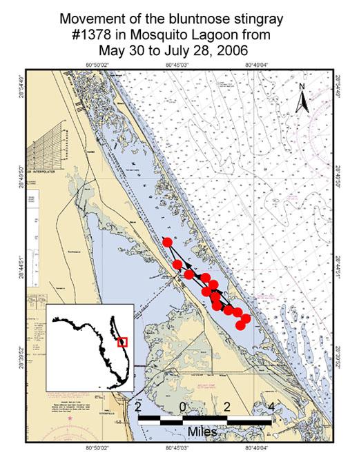 Map of bluenose movement