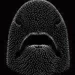 Hatchling-Head-Emissive-Render-Underside