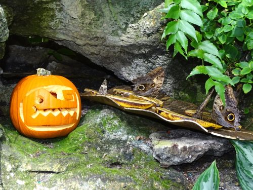Halloween in the Rainforest