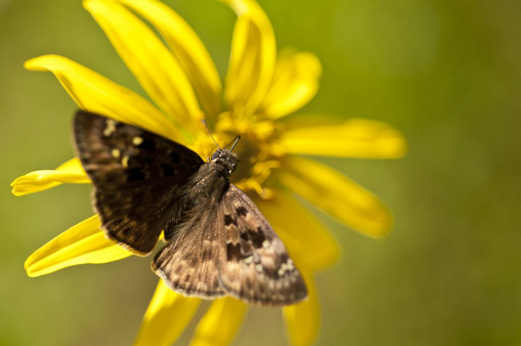 butterfly on yellow flower in garden
