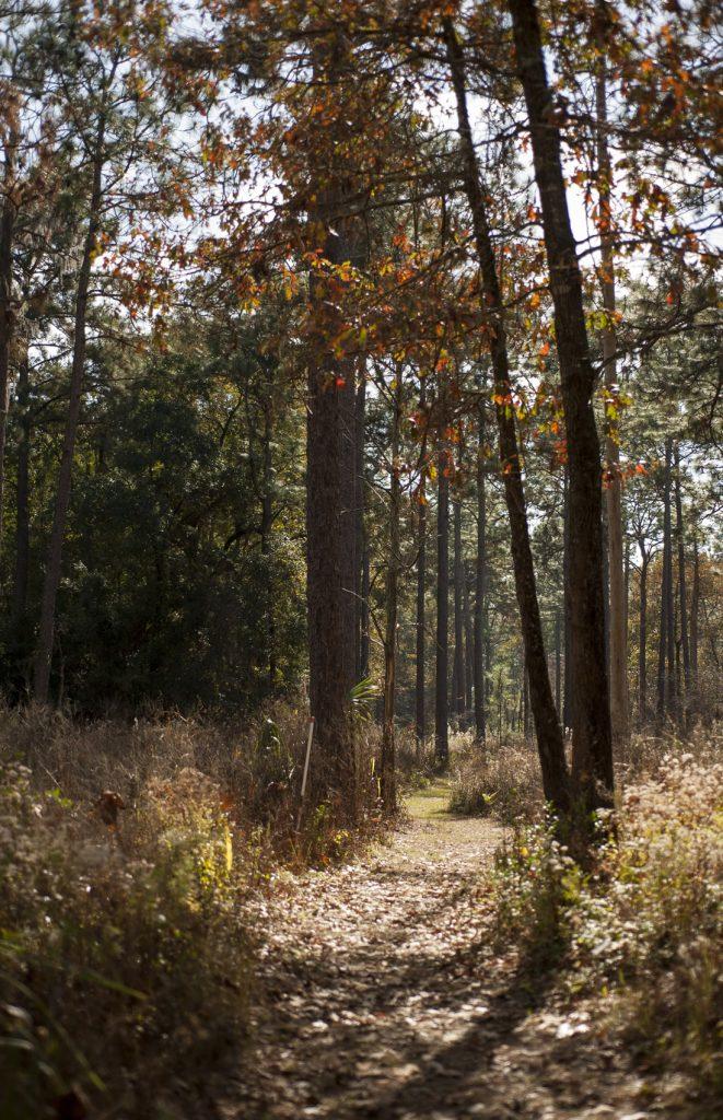 NATL woods