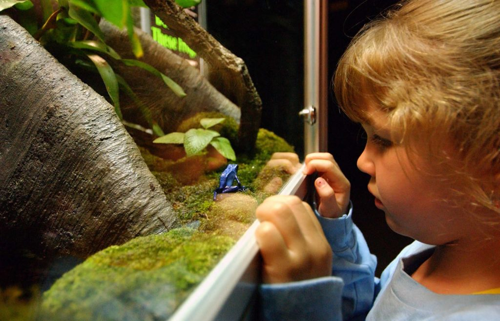 Child with Dart Poison frog