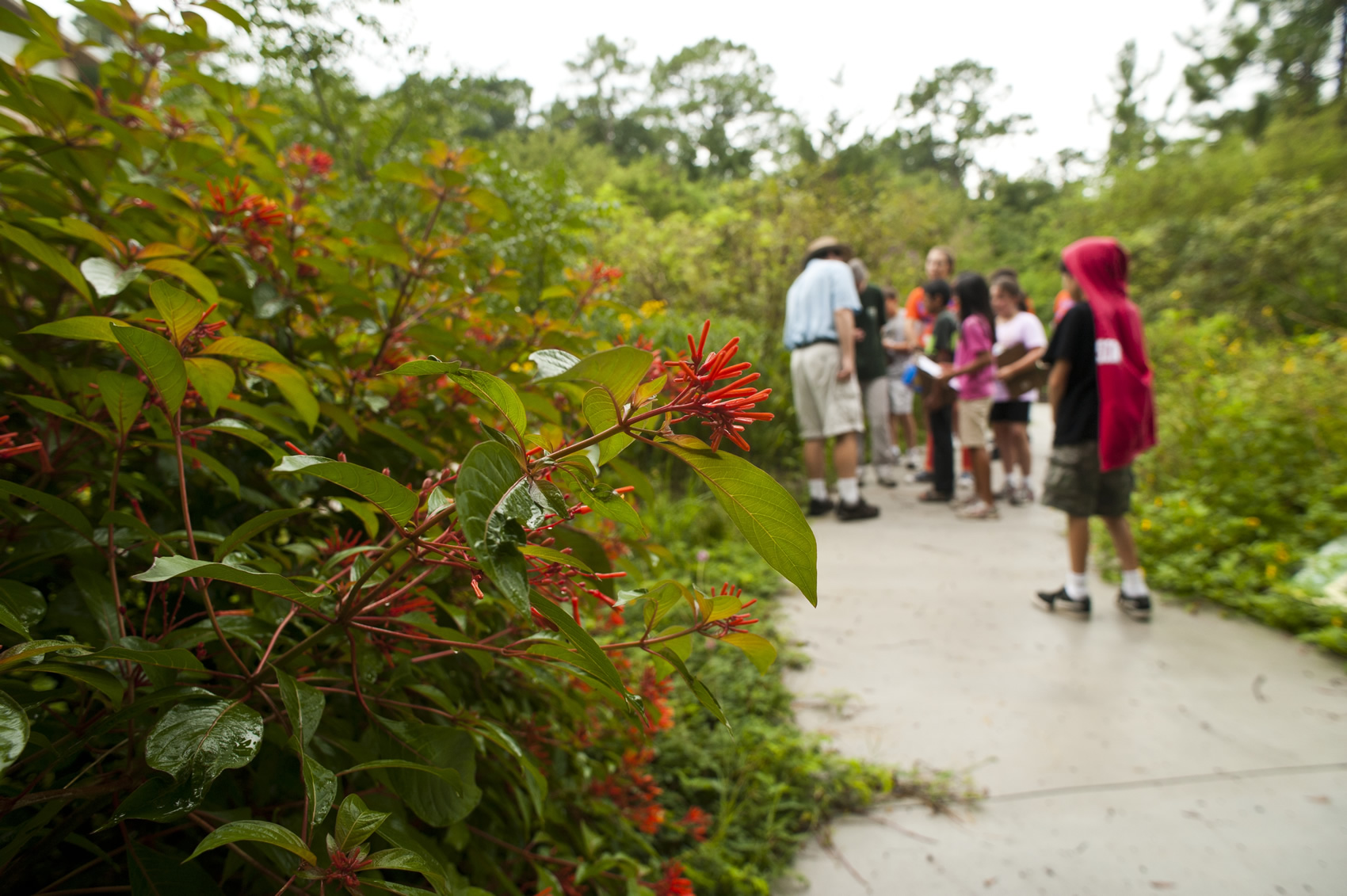 school group in wildflower garden - Florida Butterfly Garden