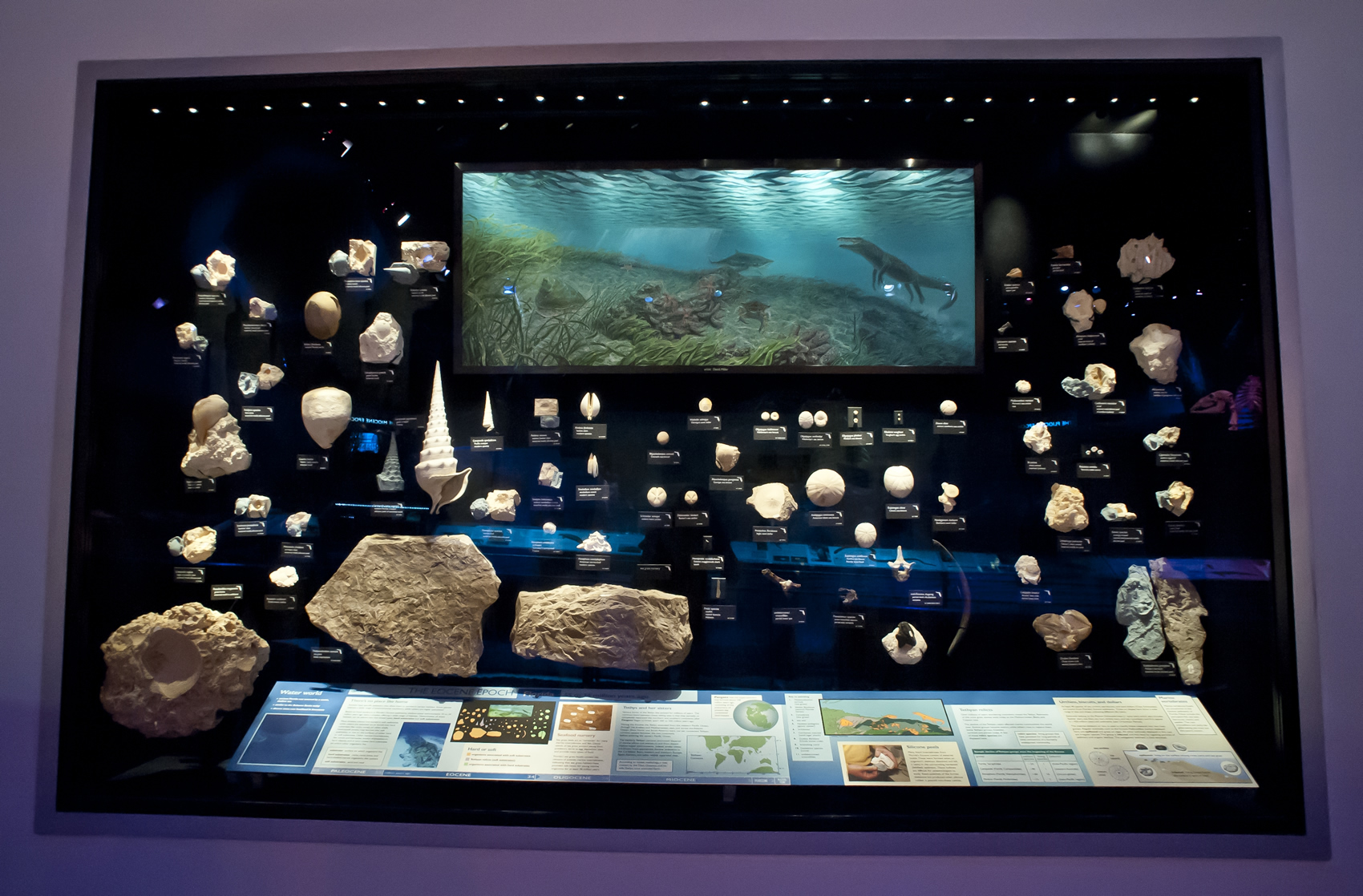 Florida Fossils: Evolution of Life and Land – Exhibits