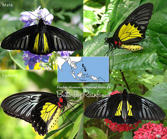 Image Result Forerfly Garden And Museum And Gainesville Fl