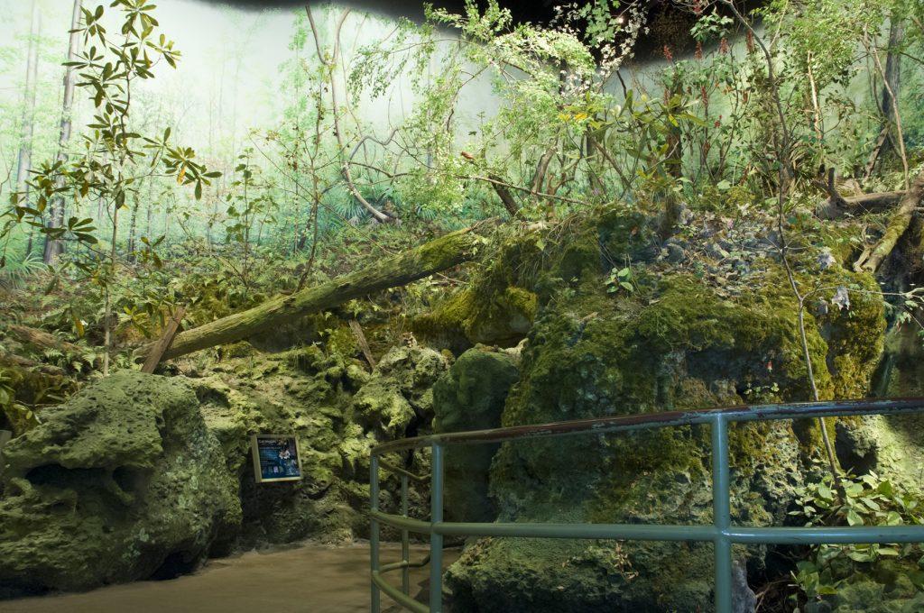 Hammock Forest in NW Florida exhibit