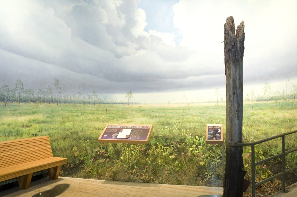 Seepage Bog in NW Florida exhibit