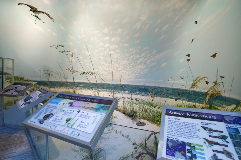 Barrier Islands in NW Florida exhibit