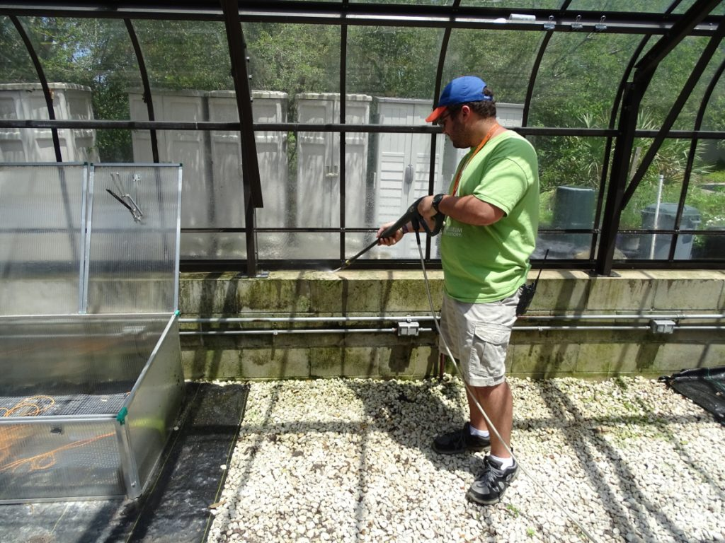 Greenhouse cleaning, May 2017