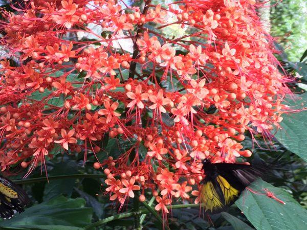 Pagoda flower half header