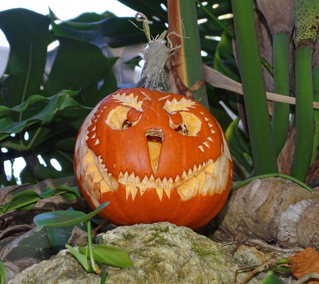 Halloween Pumpkin, Face