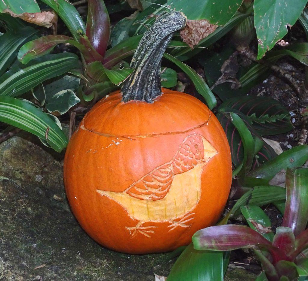 Halloween Pumpkin, Finch