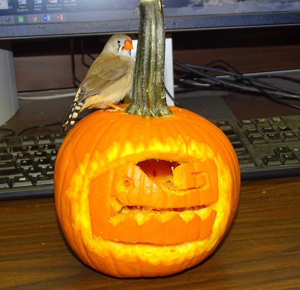 Halloween Pumpkin, Gator