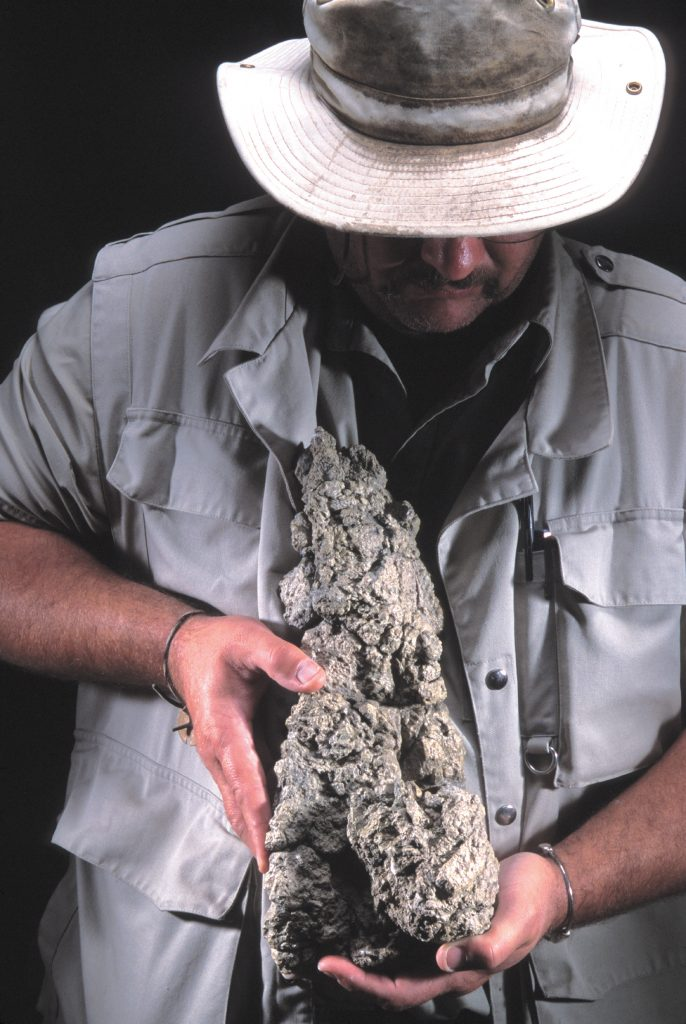 Theropod coprolite