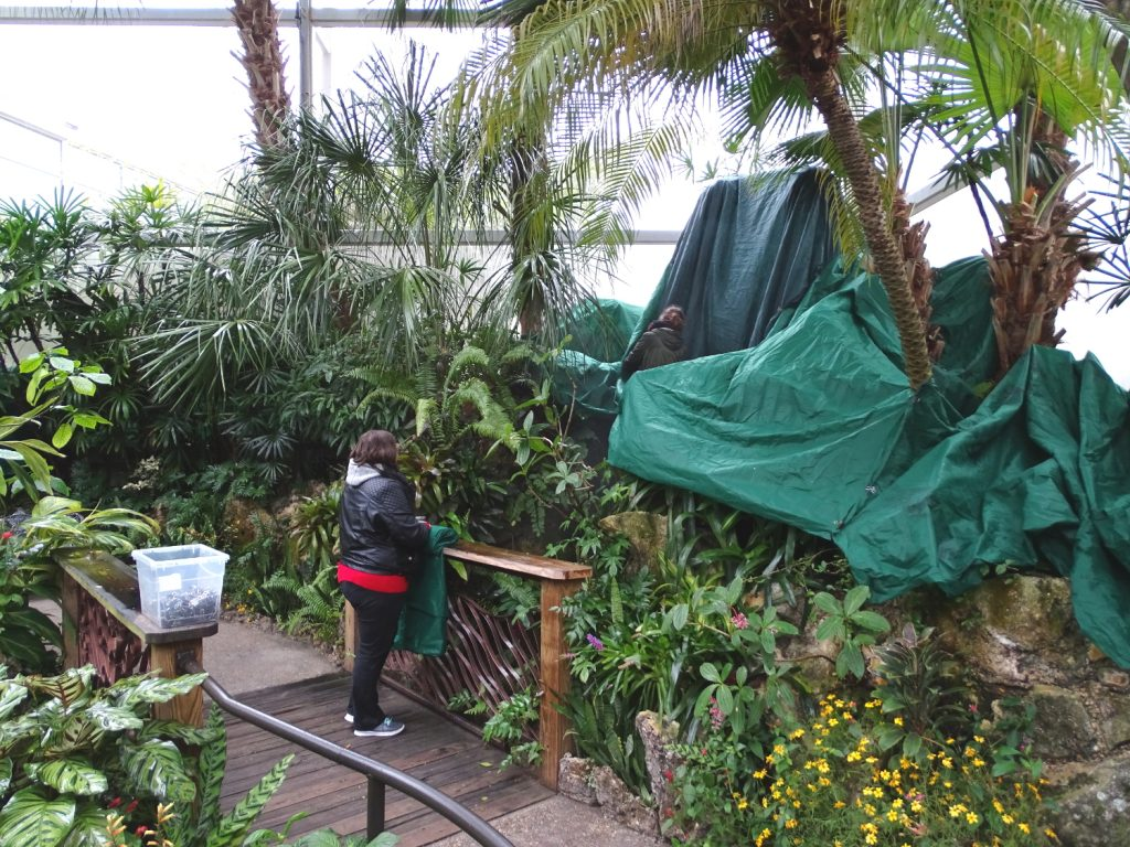 helping cover Rainforest plants